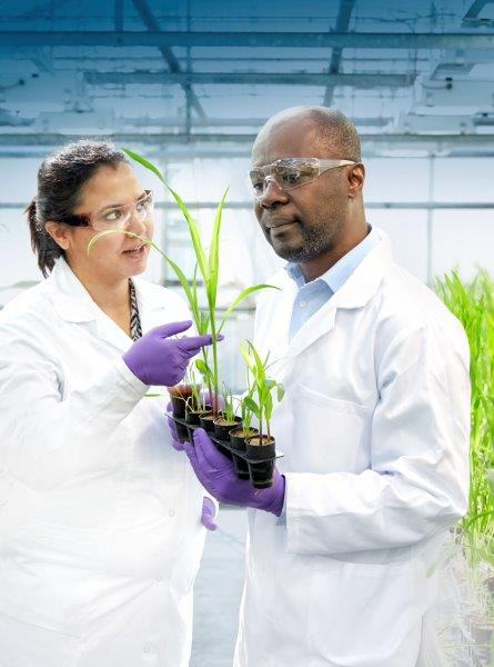 Researchers inspecting young plants