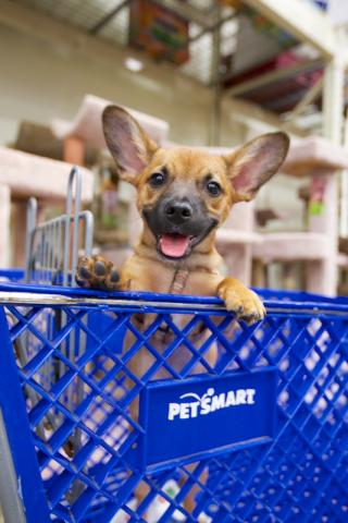 Petsmartadoptioinevent